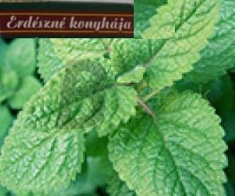 Erdészné citromfű (10 g) ML067464-26-3