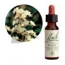 Bach virágeszencia fehér vadgesztenye (10 ml) ML058833-110-1